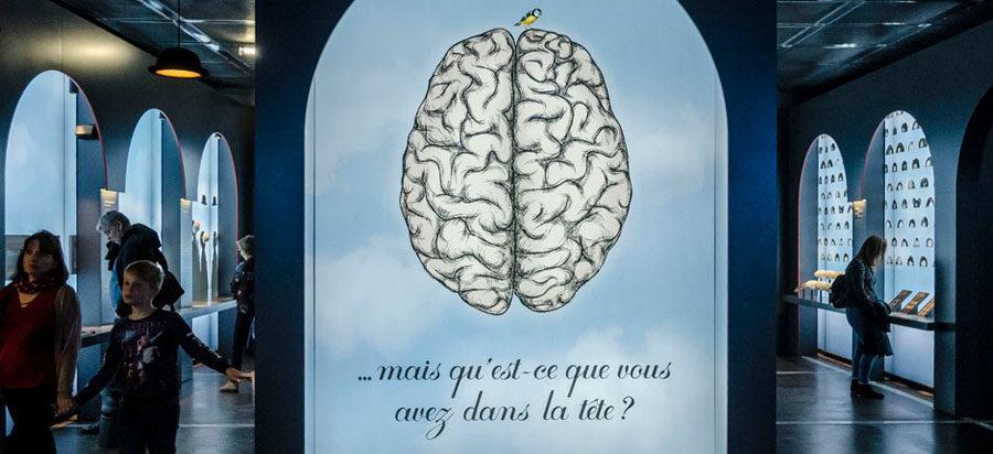 Pour sa silencieuse de novembre, la Cité des sciences fait fondre votre cerveau